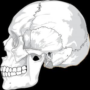 顎関節のイラスト