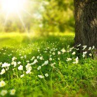 日光浴の効果