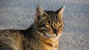 猫背を見つめる猫