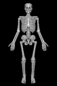 骨格を整体
