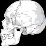 顔・頭蓋骨の歪み